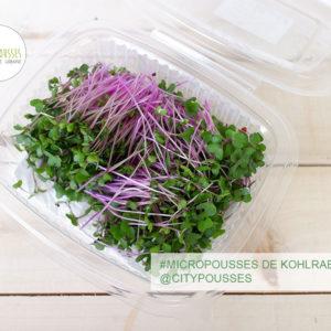 Micropousses de Kohlrabi - Citypousses. Pousses bio cultivées sur fibre de coco à Clamart. Agriculture urbaine - ferme urbaine - cityculteur
