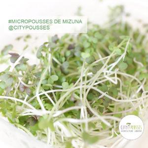 Barquette de Micropousses de Mizuna- Citypousses. Pousses bio cultivées sur fibre de coco à Clamart. Agriculture urbaine - ferme urbaine - cityculteur