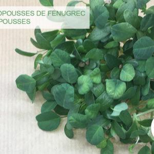 Micropousses de Fenugrec - Citypousses. Pousses bio cultivées sur fibre de coco à Clamart. Agriculture urbaine - ferme urbaine - cityculteur